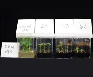 Plantlet performance experiment
