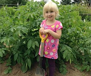 Little potato grower
