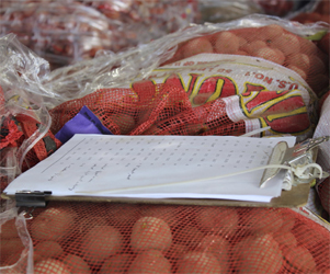 Potato Evaluation
