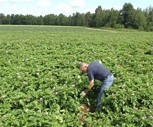 Keith Heinzen digging up rogue plants